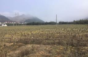 浙江省杭州市临安市林木苗圃地8000亩出租 土地编号:21
