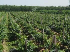 【土地流转致富案例】农村土地流转能给农民带来什么好处?如何实现脱贫致富?
