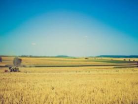 土地确权后会拥有土地使用证吗?