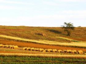 农村土地流转是什么意思