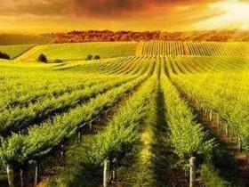 名词解析:农业产业化联合体