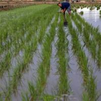 湖北天门卢市镇10亩水田寻求水稻示范合作 土地编号:12