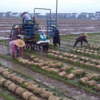 湖北浠水清泉镇15亩水田寻求水稻示范合作 土地编号:15
