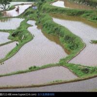 湖北汉川新堰镇11亩水田水稻示范合作 土地编号:17