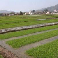 湖北仙桃三伏潭镇10亩水田寻求水稻示范合作 土地编号:19