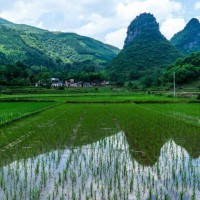 湖北枣阳兴隆镇10亩水田寻求水稻示范合作 土地编号:18