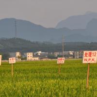 安徽省肥西县138亩示范田