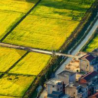 安徽省滁州市天长市520水稻小麦示范田