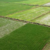 安徽省滁州市天长市649亩水稻种植示范田 土地编号:51