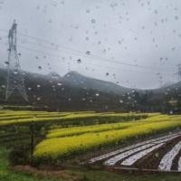 安徽省滁州凤阳88亩水田寻求水稻示范种植合作 土地编号:76
