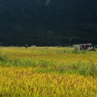 安徽省滁州市明光1000亩水田寻求水稻种植示范合作 土地编号:77