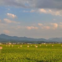 安徽省六安裕安区1000亩水田水稻种植示范合作 土地编号:94