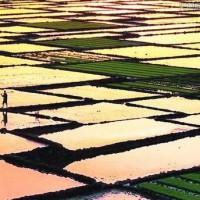 安徽省安庆市桐城市2330亩水田寻求水稻示范种植合作