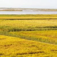 安徽省安庆怀宁县1020亩水田寻求水稻示范种植合作 土地编号:210