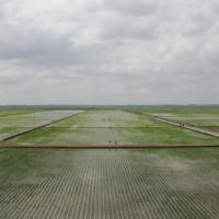安徽省安庆怀宁县500亩水田寻求水稻示范种植合作 土地编号:211
