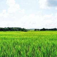 安徽省安庆怀宁县200亩水田寻求水稻示范种植合作 土地编号:212