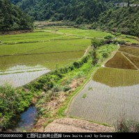 安徽省安庆怀宁县200亩水田寻求水稻种植示范合作 土地编号:213