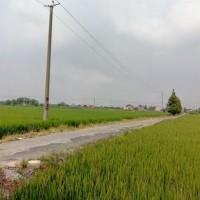 安徽省安庆怀宁县480亩水田寻求水稻示范种植合作 土地编号:215