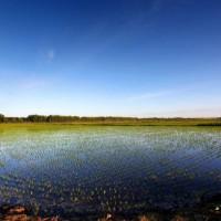 安徽省安庆怀宁县436亩水田寻求水稻示范种植合作 土地编号:217