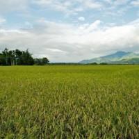 安徽省安庆市大观区110亩水田寻求水稻种植示范合作 土地编号:218