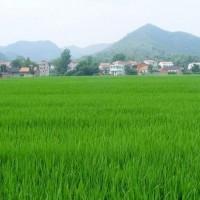 安徽省安庆市大观区110亩水田寻求水稻种植示范合作 土地编号:222
