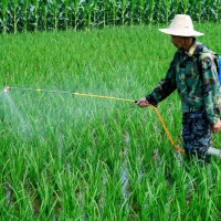 安徽省安庆市大观区120亩水田寻求水稻种植示范合作 土地编号:224
