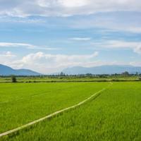 安徽省安庆市大观区2000亩水田寻求水稻种植示范合作 土地编号:225