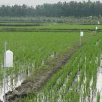 安徽省安庆市大观区50亩水田寻求水稻种植示范合作 土地编号:227