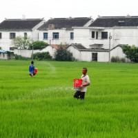 安徽省黄山市黄山区42亩水田寻求水稻种植示范合作 土地编号:229
