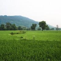 安徽省黄山市黟县390亩水田寻求水稻种植示范合作 土地编号:230