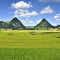 湖南永州祁阳县黄泥塘镇600亩水田可做水稻示范 土地编号:234
