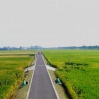 湖南常德桃源县观音寺镇1500亩水田可做示范田