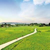 湖南常德市桃源县1500亩水田可做示范田