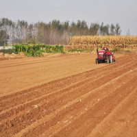 云南昭通市1000亩旱田提供玉米示范合作