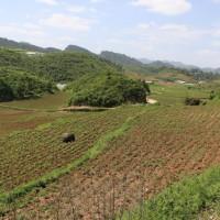 云南鲁甸县860亩旱田提供玉米示范合作 土地编号:245