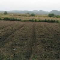 云南昆明市禄劝县490亩旱田提供玉米示范合作 土地编号:246
