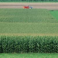云南曲靖市富源县600亩旱田提供玉米示范合作 土地编号:247