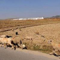 云南曲靖市沾益区1380亩旱田提供玉米示范合作
