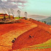 云南大理宾川县860亩旱田提供玉米示范合作 土地编号:249