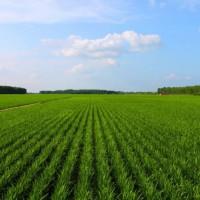云南文山州890亩旱田提供玉米示范合作 土地编号:250