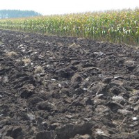 云南开远市576亩旱田提供玉米示范合作 土地编号:251