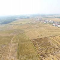 云南丽江市宁蒗县3000亩旱田提供玉米示范合作