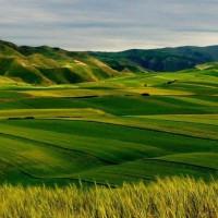 云南大理南涧县980亩旱田提供玉米示范合作 土地编号:254