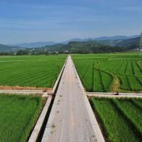 云南楚雄875亩旱田提供玉米示范合作 土地编号:255