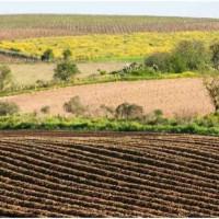 云南曲靖会泽县958亩旱田提供玉米示范合作 土地编号:256