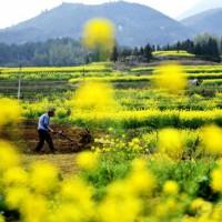 云南曲靖会泽县1000亩旱田提供玉米示范合作 土地编号:257