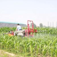 云南保山市520亩旱田提供玉米示范合作 土地编号:259