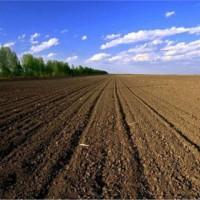 云南大理祥云县400亩旱田提供玉米示范合作 土地编号:260