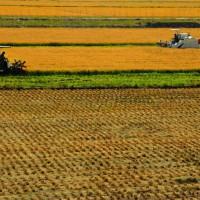 云南宣威市1200亩旱田提供玉米示范合作
