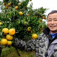 浙江宁波象山毛洋乡80亩柑橘药肥示范 土地编号:263
